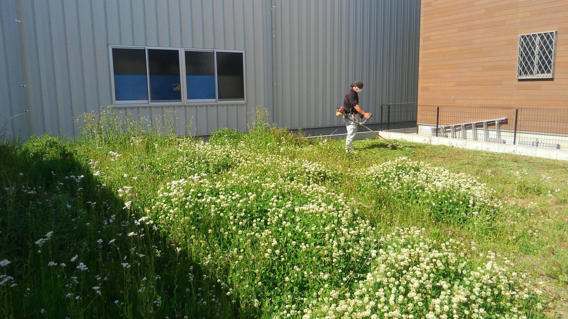 まもなく着工です!すくすくとのびた雑草たち!地盤改良の前に草刈です。
